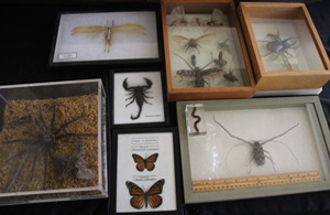 Assorted mounted arthropods