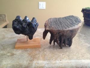 Mastodon molar (left) and Mammoth molar (right)