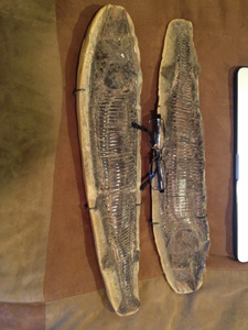 gallery � fossils and animal artifacts rock n roll reptiles