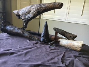 Triceratops Horns