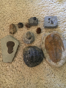 Gallery – Fossils an...